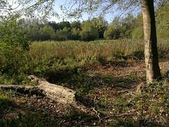 Etang en forêt (bpmm) Tags: nord phalempin arbres forêt massette étang