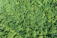 The Trees Below, Hong Kong (Geraint Rowland Photography) Tags: tree vegetation aerialview aerialperspective trees treelines jungle forrest tiantanbuddhaislocatedatngongping lantauisland hongkong droneperspective dronepointofview gettyimages visithongkong hongkongtourism environment zsoltschuller broccoli wwwgeraintrowlandcouk landscapephotography canon canonphotography cablecar transport