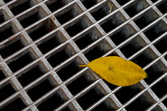 Autumn (Art de Lux) Tags: berlin germany autumn herbst leaf blatt grid gitter rost yellow gelb artdelux