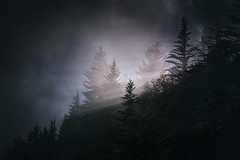 Light of The Evenstar (johanhakanssonphotography) Tags: blueridgeparkway fog light spring trees forest glow rays southernappalachians westernnorthcarolina northcarolina nikon hiking travel magic dark moody blueridgemountains johanhakanssonphotography lotr weather storm