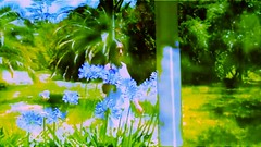 SDGD -WPhS (WPH-S Gabriel Amq) Tags: serie web gabriel amq arte lowfi under low cine povera art ddhh mujer experimental musica techno tech lofi celular tablet ld