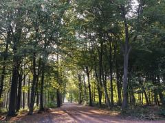 Drève forestière (bpmm) Tags: nord phalempin arbres chemin forêt