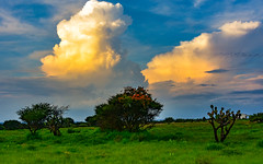 Observing the clouds (FVillalpando) Tags: clouds sunset sky summer colours semiarid land light ngysa nature