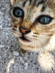 Tiny tiger in Cyprus. (marieke_verschuren) Tags: cats cat cyprus catsofcypres cypres closeup animal eyes