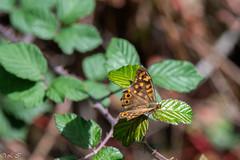 _DSC1644 (Inapapel) Tags: 100mm 2019 bioaniztasuna biodiversidad bitxos bizkaia d850 flickr nature nikon