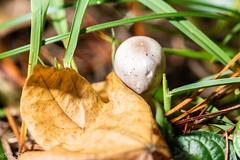 _DSC1622 (Inapapel) Tags: 100mm 2019 bioaniztasuna bizkaia d850 flickr nature nikon mushrooms