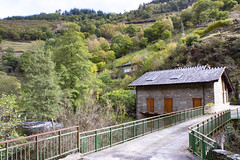 (Luis Kelly) Tags: salime grandas trees españa naturaleza nature spain árboles north asturias norte