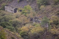 (Luis Kelly) Tags: grandas salime asturias españa spain north norte nature naturaleza trees árboles