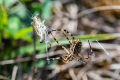 _DSC1437 (Inapapel) Tags: 100mm 2019 bioaniztasuna biodiversidad bitxos bizkaia d850 flickr nature nikon
