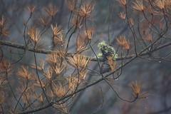 (Luis Kelly) Tags: grandas salime asturias españa spain north norte nature naturaleza