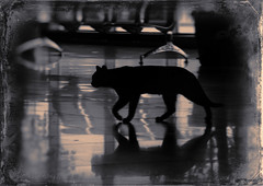 "Cat_Siloute_Vintage (Lyutik966) Tags: cat animal silhouette reflection floor light shadow hall room crocusexpo krasnogorsk russia vintage coth5 alittlebeauty littledoglaughednoiret ""exoticimage"" shockofthenew"