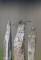 BVG_2473 (Borreltje.com) Tags: keelven someren nature natuur