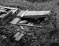 In a forest near Moscow I (0kanakov) Tags: fuji fujifilm x20 fujix20 fujifilmx20 landscape woods russia nature blackandwhite woodland forestfloor