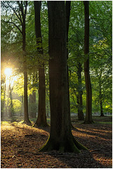 (walk in the country) Tags: trees forest light afternno autumn sun sunlight dyrehaven walk