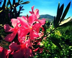 Summer flower (BrooksieC) Tags: summer flower nature countryside sky hills plants