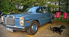 Picknick mit dem Mercedes-Benz W114 (D.STEGEMANN) Tags: auto classic car vintage mercedes benz 8 oldschool retro mercedesbenz oldtimer strich8 w115 w114 kraftfahrzeug nikon z7 nikonz7 dog pet hund dackel tier valtra