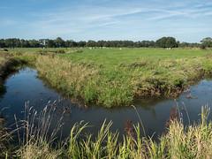 Looner diep (Jeroen Hillenga) Tags: drenthe netherlands nederland natuur nature natuurgebied natur rivier river beek