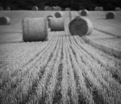 Haystack (emdeelogy) Tags: haystack isleofwight uk nature meadow straw bw
