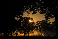 (crosslens) Tags: trees sun sunrise morning goldenhour fog rays mist landscape homeiswheretheheartis
