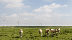 's Gravenpolder (Omroep Zeeland) Tags: zeeland mills cows dier nieuw serie