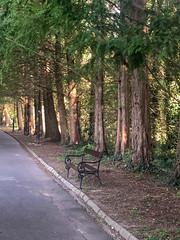 Hévíz (farkas.reka) Tags: tree treelicious forest hungary lake balaton hévíz iphoneography