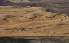 Palouse (GFey) Tags: steptoe butte whitman county wheat field washington palouse
