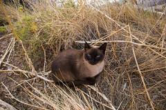 Wilde Katze rastet (Tobias Willmann) Tags: mallorca cala ratjada natur nature nikon d3200 outdoor gras gelb katze entspannen outside spanien wild rasten relax