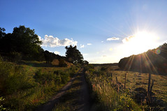 Late summer sun (DameBoudicca) Tags: sweden sverige schweden suecia suède svezia スウェーデン summer sommar sommer verano été estate 夏 skåne