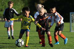"""HBC Voetbal • <a style=""""font-size:0.8em;"""" href=""""http://www.flickr.com/photos/151401055@N04/48777419766/"""" target=""""_blank"""">View on Flickr</a>"""