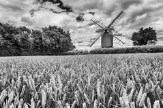 en route to bread (David Feuerhelm) Tags: mono monochrome bw blackandwhite infrared wideangle noiretblanc schwarzundweiss blancoynegro building mill windmill postmill sails wood structure old history historic field crop wheat trees sky countrtyside ashdon essex england sigma1020mf456 nikon d90