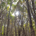 23343-trees at italiano