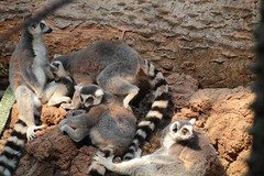 IMG_1106 (neatnessdotcom) Tags: bronx zoo wcs park animal new york city tamron 18270mm f3563 di ii vc pzd canon eos rebel t2i 550d