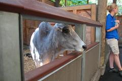 IMG_1072 (neatnessdotcom) Tags: bronx zoo wcs park animal new york city tamron 18270mm f3563 di ii vc pzd canon eos rebel t2i 550d