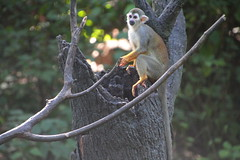 IMG_1037 (neatnessdotcom) Tags: bronx zoo wcs park animal new york city tamron 18270mm f3563 di ii vc pzd canon eos rebel t2i 550d