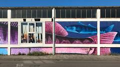 Blue and pink fish (glukorizon) Tags: animal dier facade façade fish fruitvis geometrie geometry gevel meetkunde merweharbour merwehaven nswandelingdelftrotterdam nederland portrait portret raam rotterdam ruit straat street vis window zuidholland