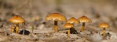 Not mushroom for any more ;-) (m&em2009) Tags: mushroom fungi macro close up nature 60mm lens nikon d7000 flora dof