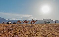 Desert Transportation, Old and New - Wadi Rum, Jordan (TravelsWithDan) Tags: tourists camels suvs sand sun mountains landscape desert wadirum jordan middleeast transportation canong3x