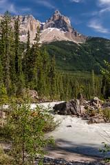 Yoho, the Mountain! (MIKOFOX ⌘) Tags: july mountain treeline learnfromexif river canada snow rocks provia xt2 mikofox rapids summer britishcolumbia peaks forest fujifilmxt2 showyourexif landscape alpine xf18135mmf3556rlmoiswr