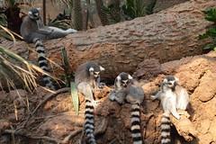 IMG_1131 (neatnessdotcom) Tags: bronx zoo wcs park animal new york city tamron 18270mm f3563 di ii vc pzd canon eos rebel t2i 550d