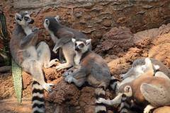 IMG_1122 (neatnessdotcom) Tags: bronx zoo wcs park animal new york city tamron 18270mm f3563 di ii vc pzd canon eos rebel t2i 550d