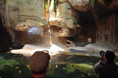 IMG_1098 (neatnessdotcom) Tags: bronx zoo wcs park animal new york city tamron 18270mm f3563 di ii vc pzd canon eos rebel t2i 550d