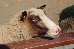 IMG_1079 (neatnessdotcom) Tags: bronx zoo wcs park animal new york city tamron 18270mm f3563 di ii vc pzd canon eos rebel t2i 550d