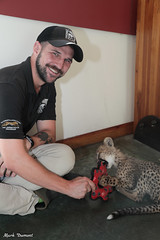G08A4573.jpg (Mark Dumont) Tags: kris cincinnati baby cheetah zoo mark dumont cat mammal