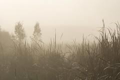 Morning at the Wetlands (njohn209) Tags: birds d500 nikon nz