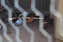 IMG_1086 (neatnessdotcom) Tags: bronx zoo wcs park animal new york city tamron 18270mm f3563 di ii vc pzd canon eos rebel t2i 550d