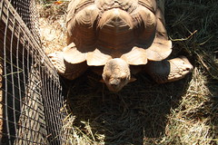 IMG_1060 (neatnessdotcom) Tags: bronx zoo wcs park animal new york city tamron 18270mm f3563 di ii vc pzd canon eos rebel t2i 550d