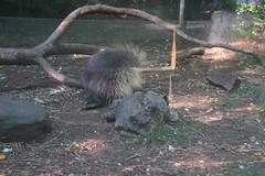 IMG_1045 (neatnessdotcom) Tags: bronx zoo wcs park animal new york city tamron 18270mm f3563 di ii vc pzd canon eos rebel t2i 550d