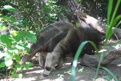 IMG_1022 (neatnessdotcom) Tags: bronx zoo wcs park animal new york city tamron 18270mm f3563 di ii vc pzd canon eos rebel t2i 550d