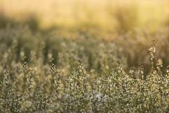 BIENVENIDA PRIMAVERA (su-sa-ni-ta) Tags: nikond7200 primavea bienvenida flores colores primerplano welcome spring flowers colors foreground cordoa argentina septiembre 2019 outside