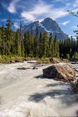 Yoho, what a River! (MIKOFOX ⌘) Tags: july mountain treeline learnfromexif river canada snow rocks provia xt2 mikofox rapids summer britishcolumbia peaks forest fujifilmxt2 showyourexif landscape alpine xf18135mmf3556rlmoiswr
